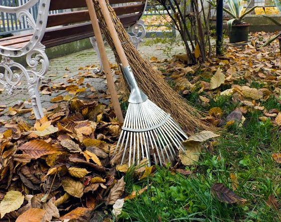 Entretien de jardin en automne CMP